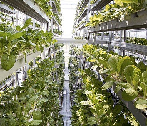 Intel<b>Link</b> - Lighting control for Vertical Farming